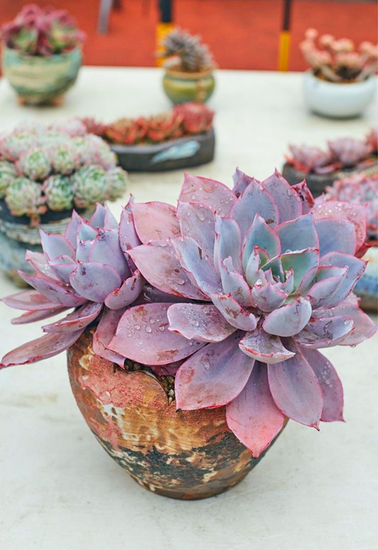 35 Simple Succulent Diy Ideas For 2019