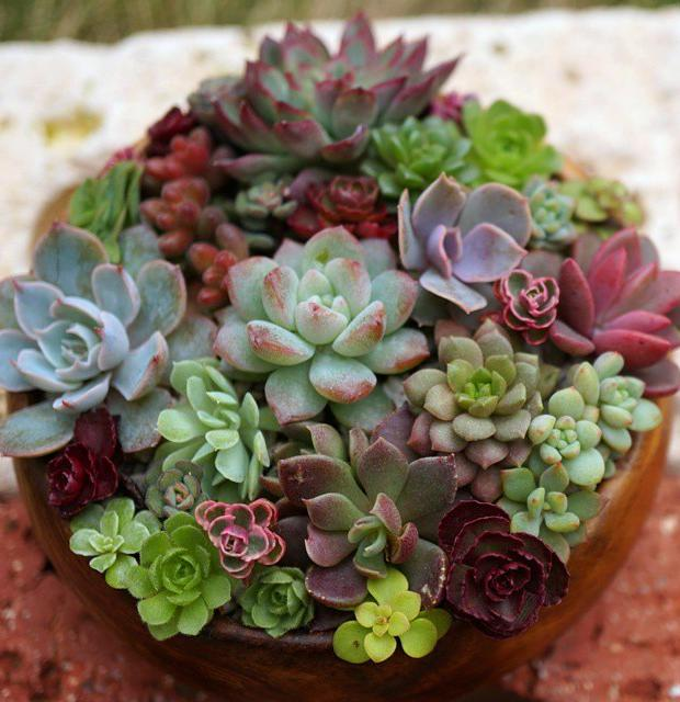 50+ Beautiful Succulent Gardens Designs For Yor