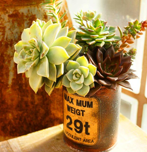50+ Beautiful Succulent Gardens Designs For Yor