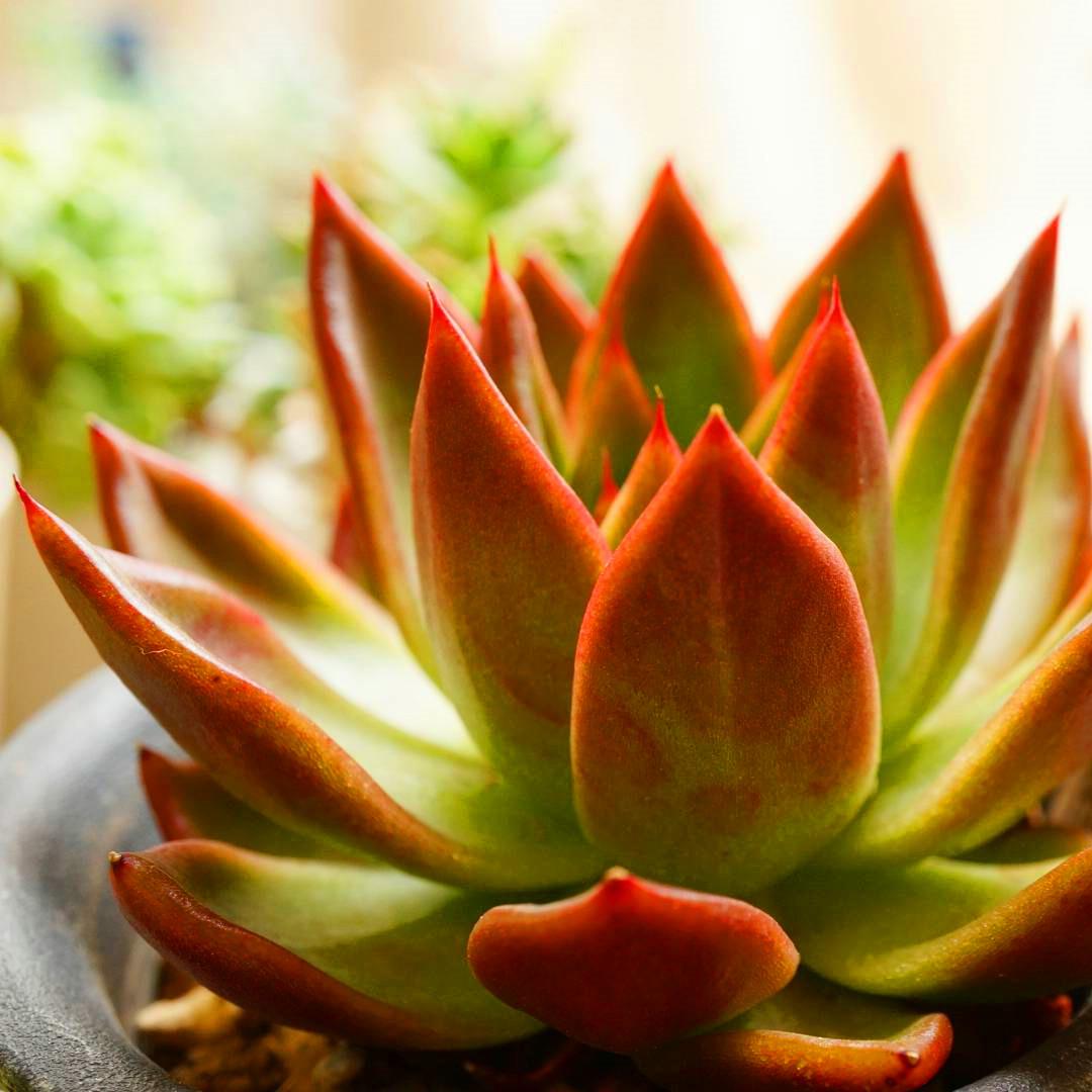 50+ Beautiful Succulent Gardens Designs For Yor #Succulent