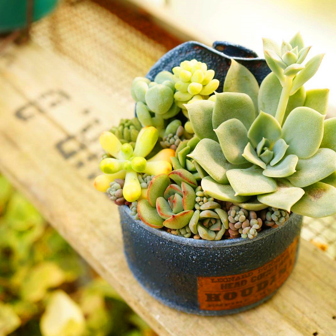 50+ Beautiful Succulent Gardens Designs For Yor #Succulent
