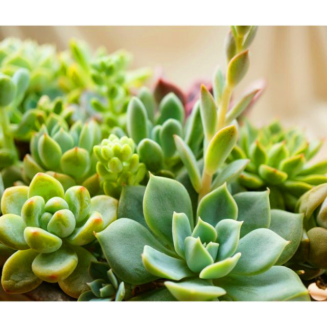 2019 Beautiful Succulent Gardens Designs For Yor