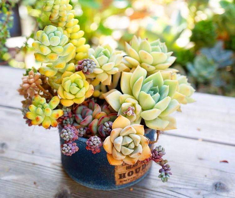 55 Marvelous Succulent Planting Ideas #succulent #succulentlove #gardens #gardening #gardenideas #gardeningtips #succulents #decorhomeideas