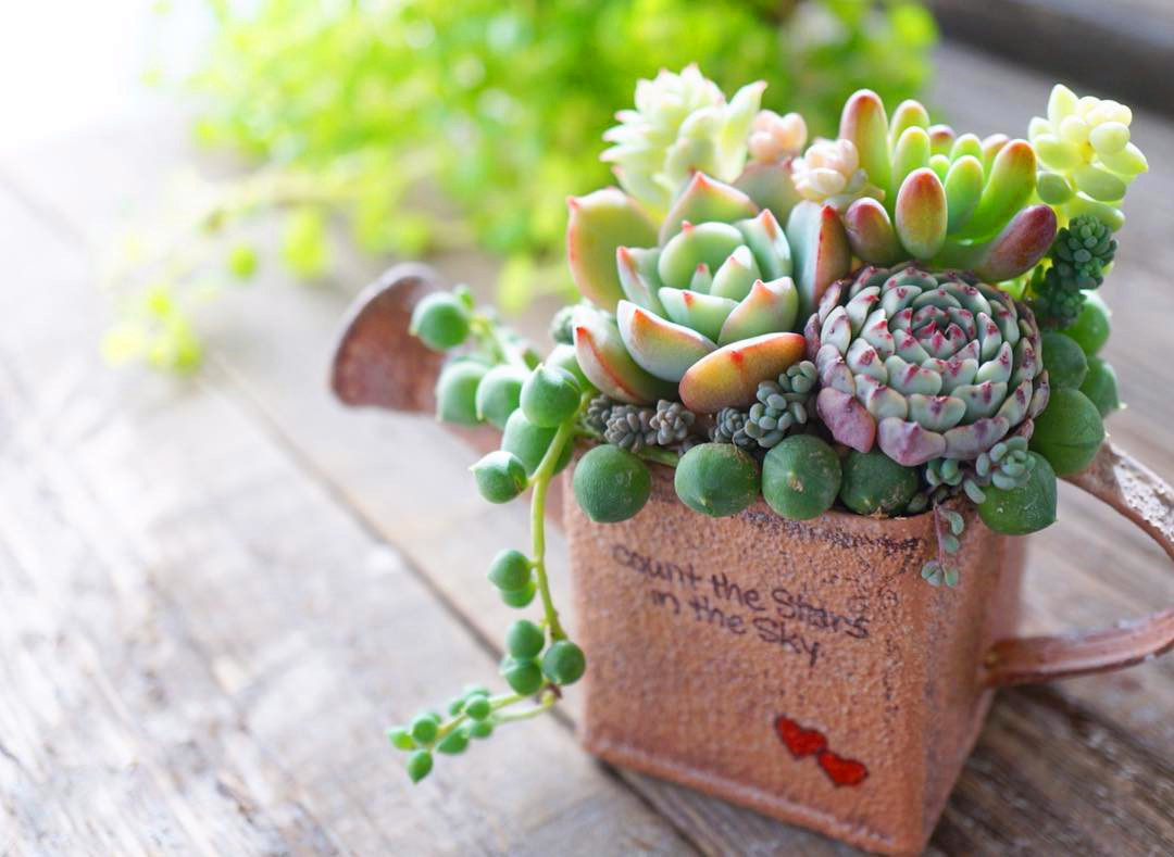 42 Amazing DIY Succulent Fairy Garden Ideas