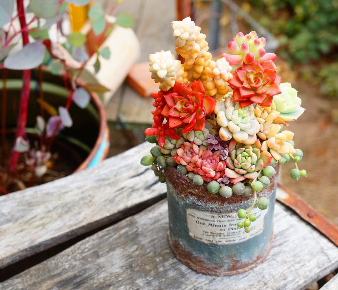 42 Amazing DIY Succulent Fairy Garden Ideas