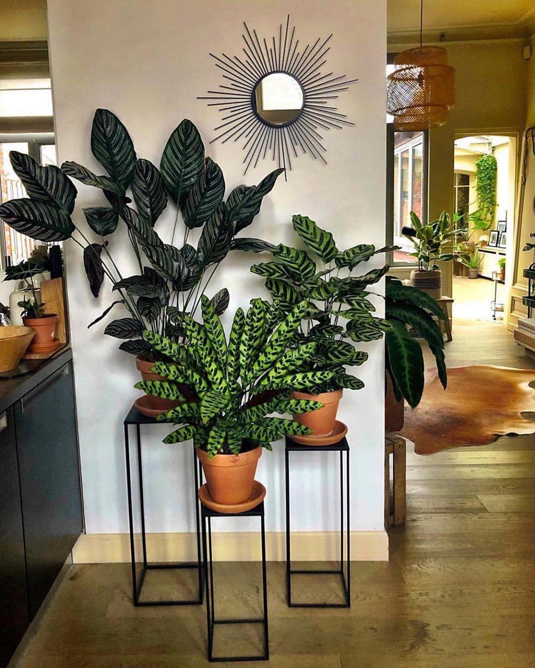 60 Indoor Decorative Plants To Bring Freshness