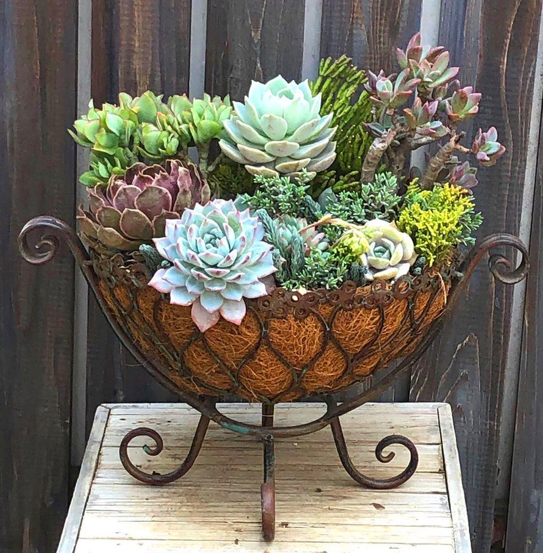 60+ DIY Hanging Succulent Ball Sphere Planter Instruction