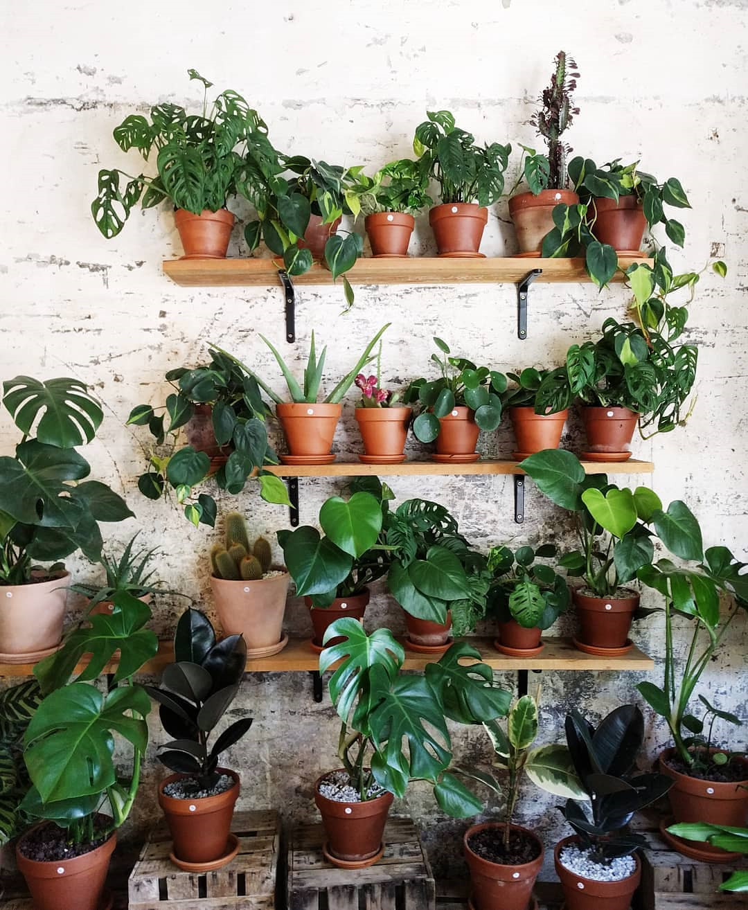 70+ Beautiful Pots and Planters to Beautify Your Small Spaces