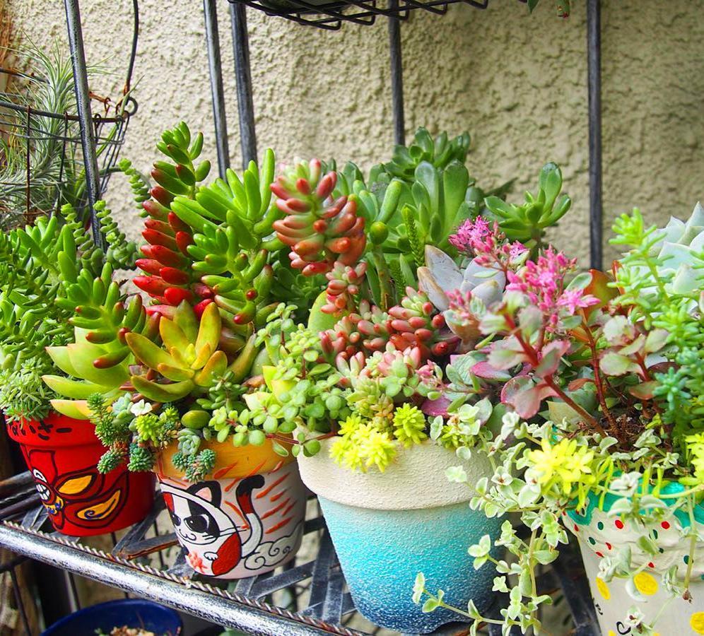 35 How To Make An Indoor Succulent Dish Garden