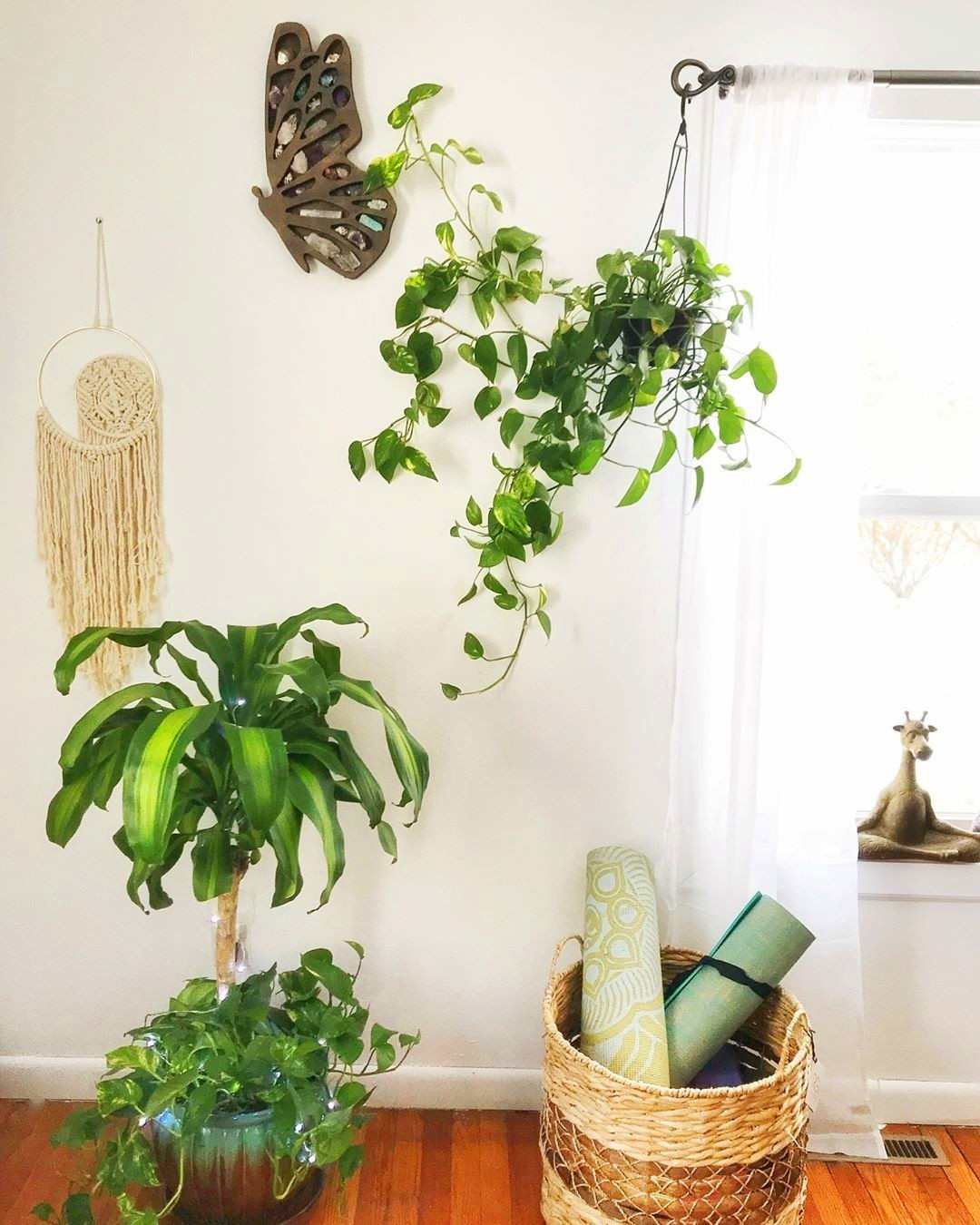 30+ Indoor Decorative Plants For Your Home