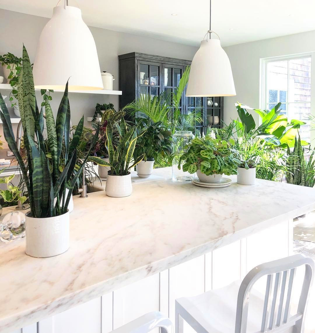 55 Marvelous Indoor Plants Design Ideas To Freshen Your Home