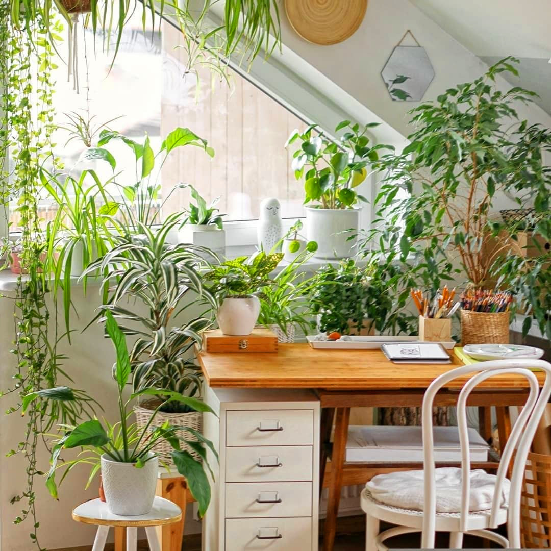 55 Marvelous Indoor Plants Design Ideas To Freshen Your Home