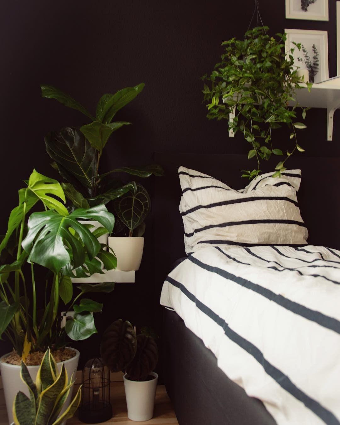 65 Beautiful Indoor Plants For Minimalist Home