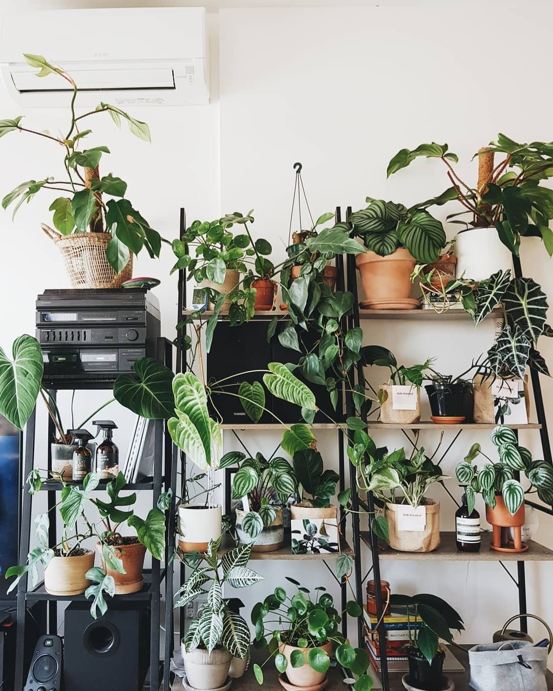 65 Beautiful Indoor Plants For Minimalist Home