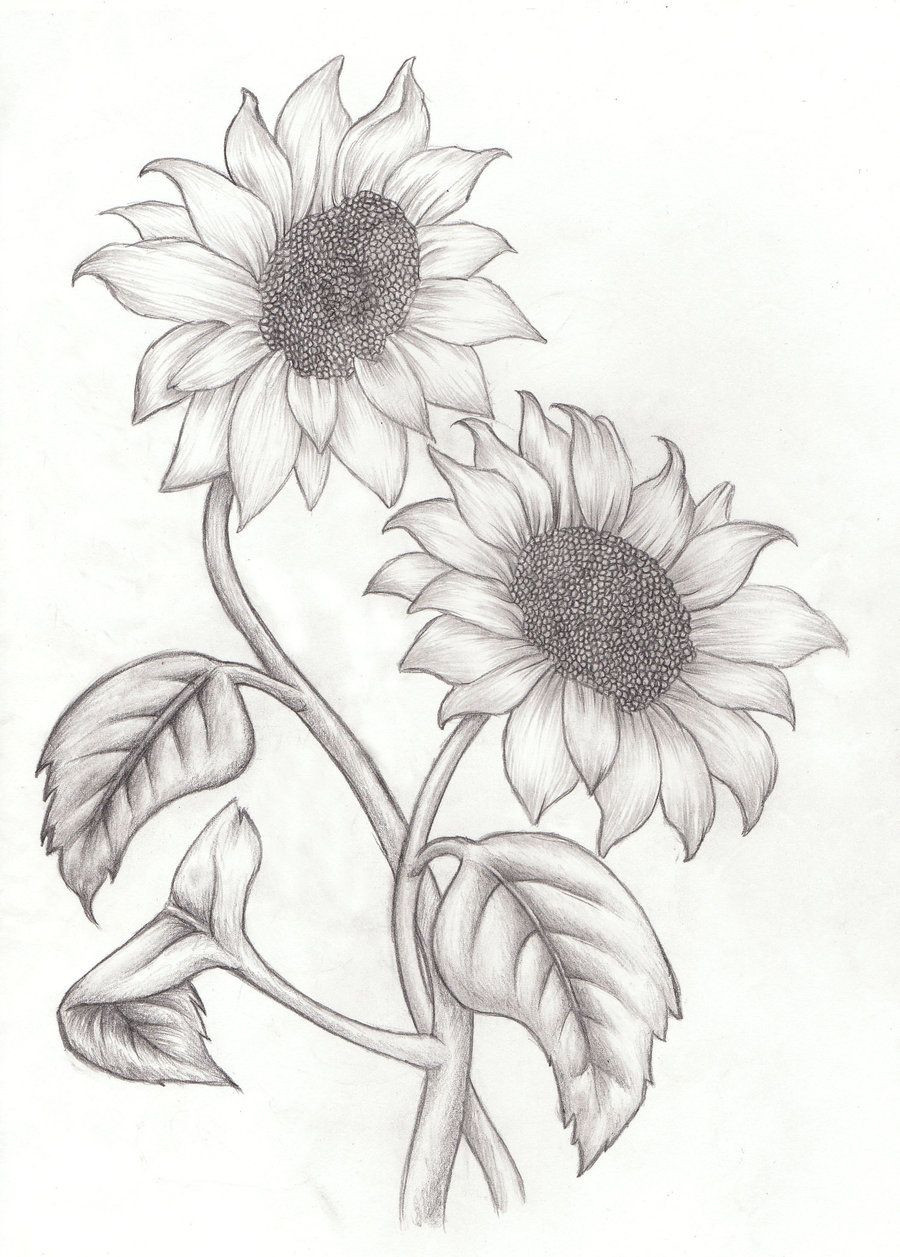 How to Draw a Sunflower Easy Step by Step Drawing Guides,sunflower drawing pattern,sunflower drawing color,sunflower drawing template,sunflower drawing images free