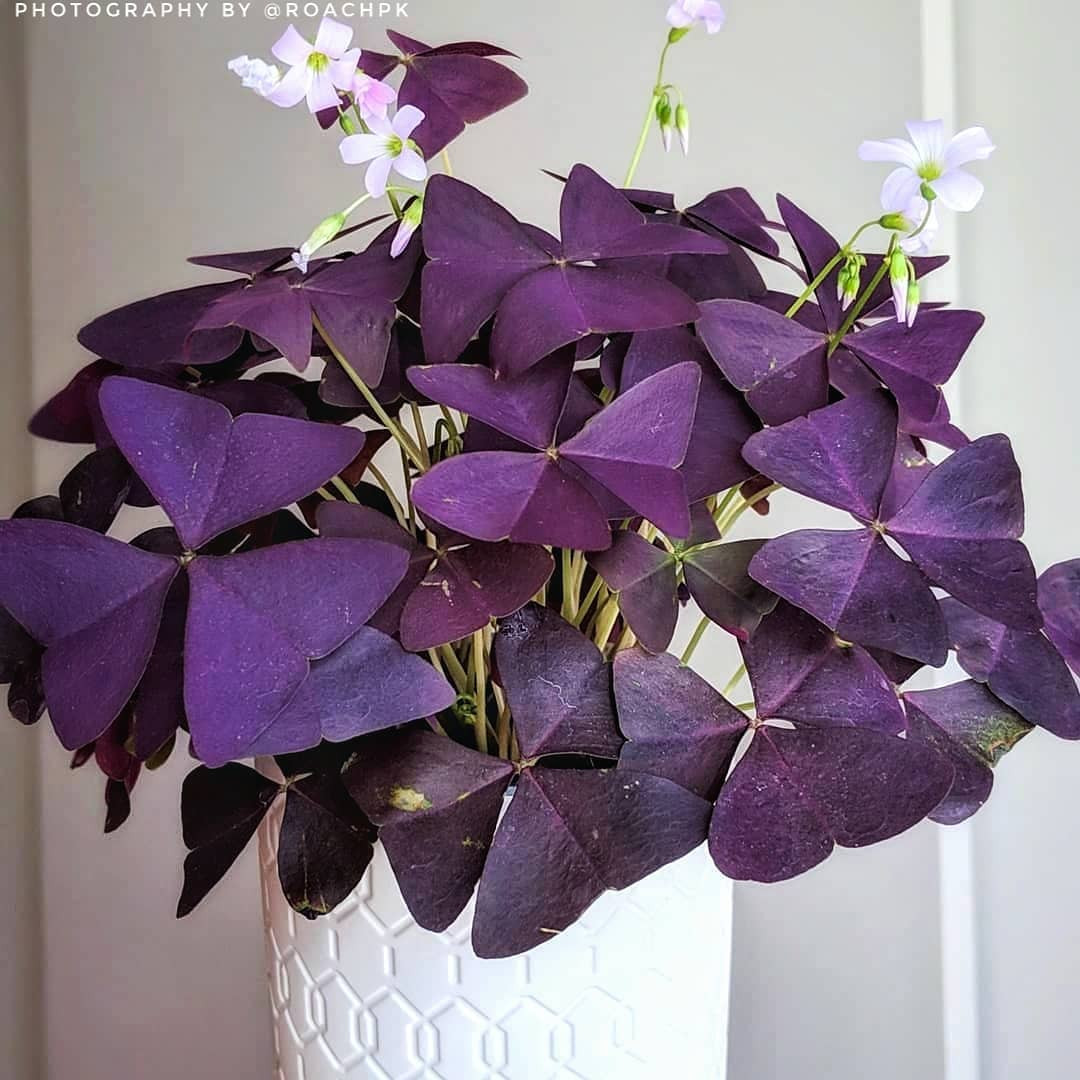 40 Best Purple House Plants