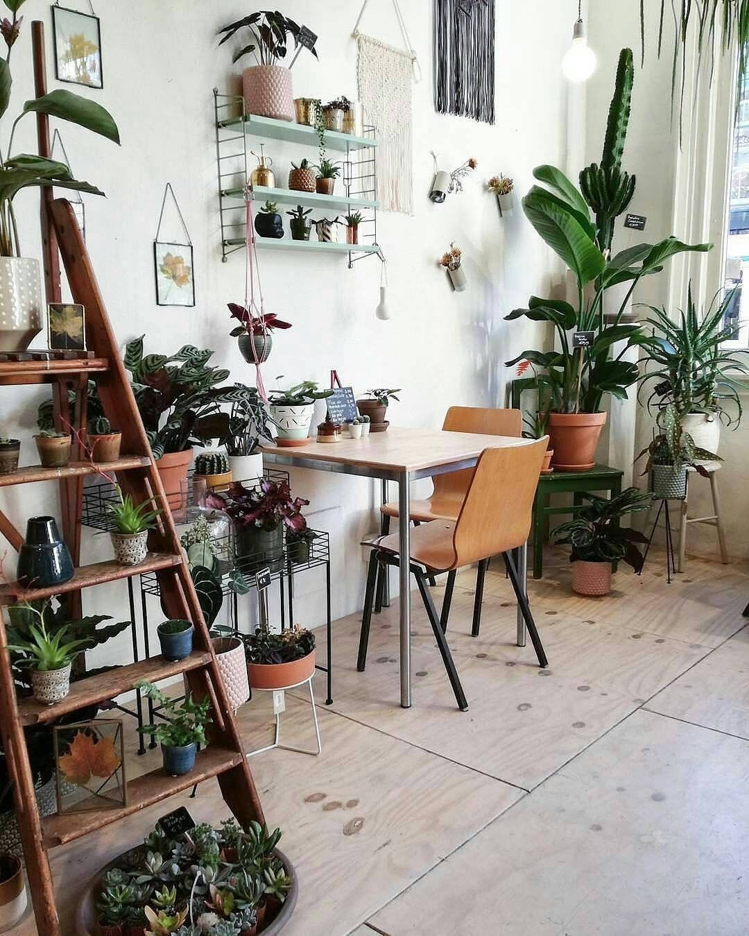70 Indoor Plants for the Small Space Gardener